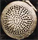 珪藻土の電子顕微鏡写真
